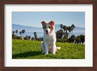A Border Collie puppy dog in a field Fine Art Print