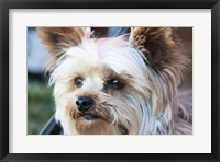 Waitching Dog with Intent Fine Art Print