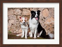 An adult Border Collie dog with puppy Fine Art Print