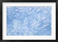 Detail of Winter Snow Fine Art Print