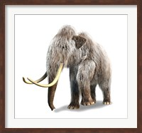 Woolly Mammoth, White Background Fine Art Print