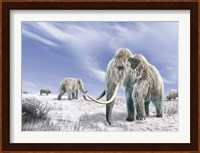 Two Woolly Mammoths in a Snow Covered Field with a Few Bison Fine Art Print