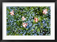 Flowers, Horseshoe Bay, British Columbia Fine Art Print