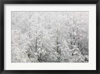 Snow-covered trees, Stanley Park, British Columbia Fine Art Print