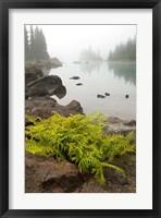 Alpine lady fern, Garibaldi Lake, British Columbia Fine Art Print