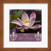 Lotus Bloom Fine Art Print