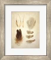 Feathers II Fine Art Print