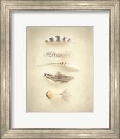 Feathers III Fine Art Print