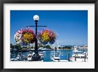 British Columbia, Victoria, Boat Harbor Fine Art Print