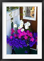 British Columbia, Victoria, Flower Pot Fine Art Print