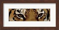 Tiger Eyes Fine Art Print
