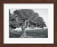 The One Tree BW Fine Art Print