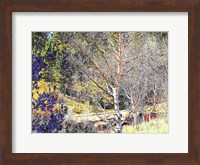 Woods II Fine Art Print
