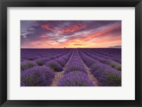 Sunrise over Lavender Fine Art Print