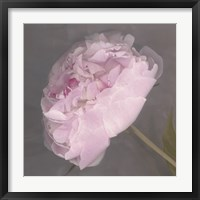 Fleur Fine Art Print