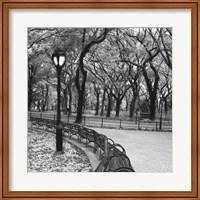A Walk Through the Park Fine Art Print
