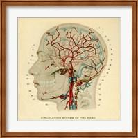 Brain Head Fine Art Print