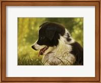 Border Collie Pup 2 Fine Art Print