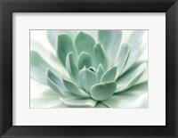 Zen Fine Art Print