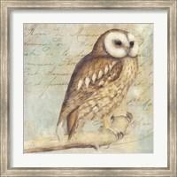White-Faced Owl Fine Art Print