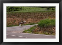 Old man rides a donkey loaded with wood, Anguiano, La Rioja, Spain Fine Art Print