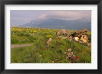 Wildflowers surround the Sacred Burial Site, Elvillar Village, La Rioja, Spain Fine Art Print