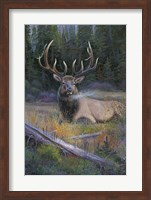 South Fork Bull Fine Art Print
