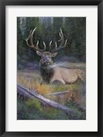 South Fork Bull Fine Art Print