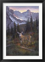 High Country Muley Fine Art Print