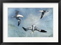 Gannets Trio Fine Art Print
