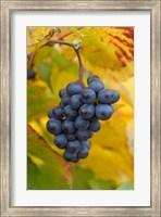 Beaujolais Red Grapes in Autumn Fine Art Print