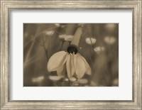 White Flower In Field Of Small Flowers Fine Art Print