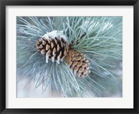 Frosted Pine Cone And Pine Needles II Fine Art Print