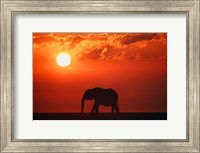 Elephant Sunset Silhouette Fine Art Print