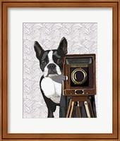 Boston Terrier Photographer Fine Art Print