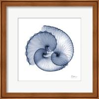 Indigo Sea Shells Fine Art Print