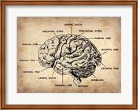 Vintage Brain Map Anatomy Fine Art Print