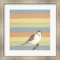 Little Brown Bird Fine Art Print