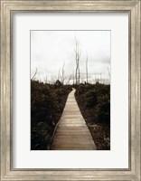 Devastation Trail Fine Art Print