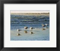 Cape May Herring Gulls Fine Art Print