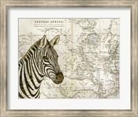 Burchell's Zebra Fine Art Print