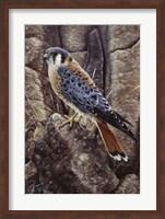 Blue Hawk Fine Art Print