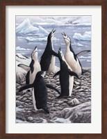 Chorus Chinstrap Penguins Fine Art Print