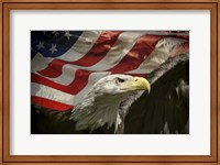 American Eagle Fine Art Print