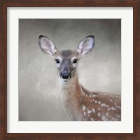Little Miss Lashes White Tailed Fawn Fine Art Print