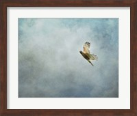Up Up And Away Red Shouldered Hawk Fine Art Print
