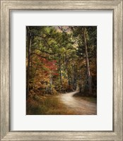 Autumn Forest 2 Fine Art Print