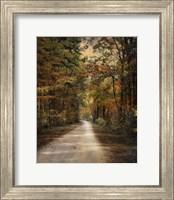 Autumn Forest 3 Fine Art Print