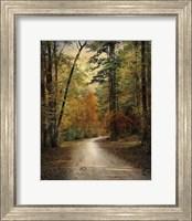 Autumn Forest 4 Fine Art Print