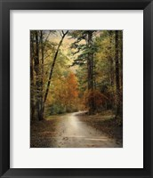 Autumn Forest 4 Fine Art Print